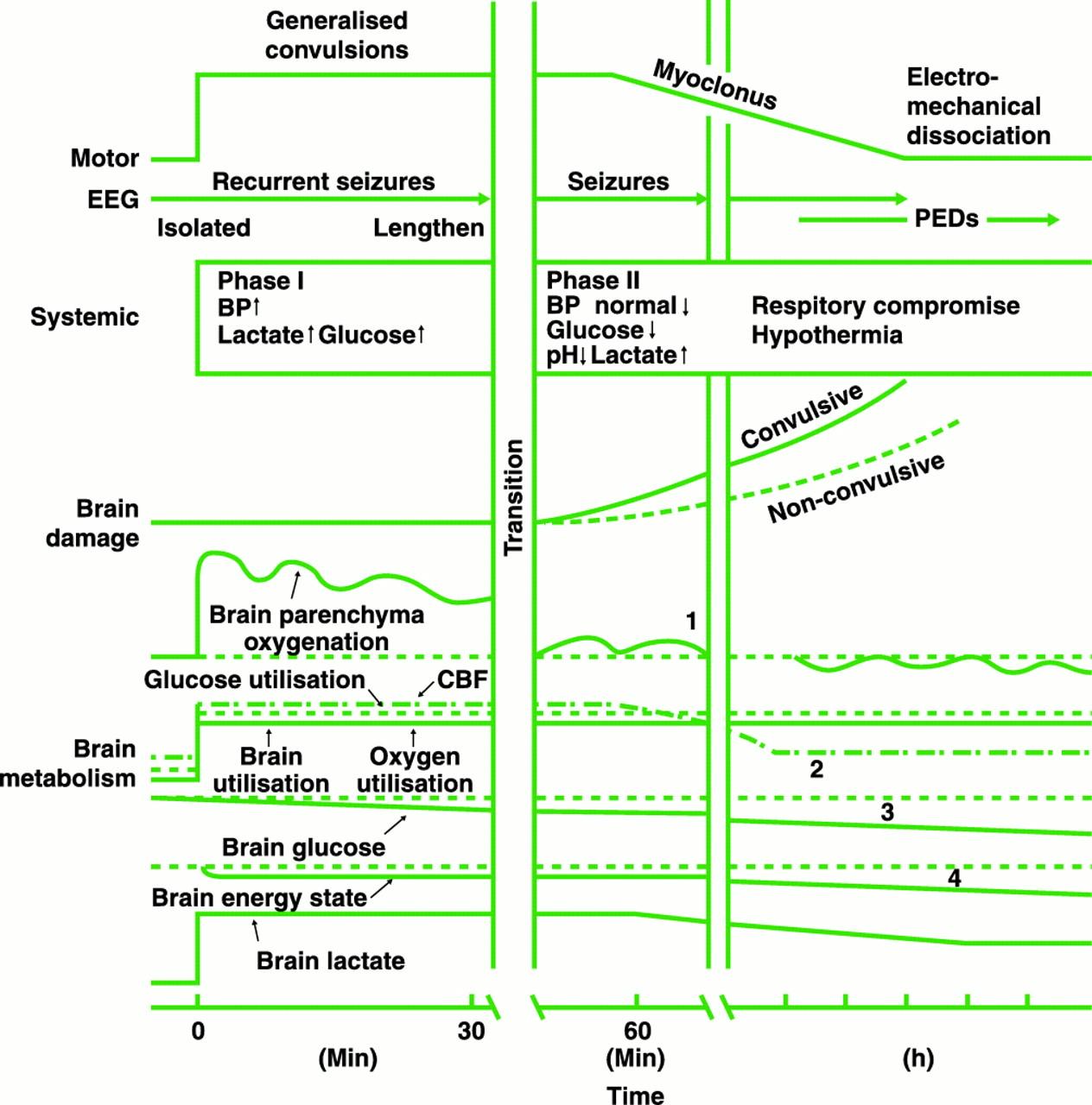 Basic Transport Phenomena