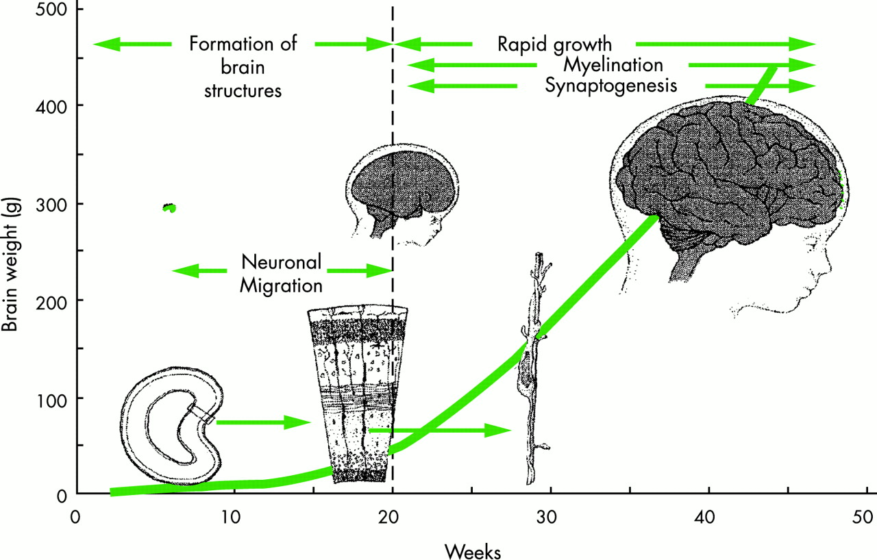 An analysis of the dominating influences in cerebral physiology