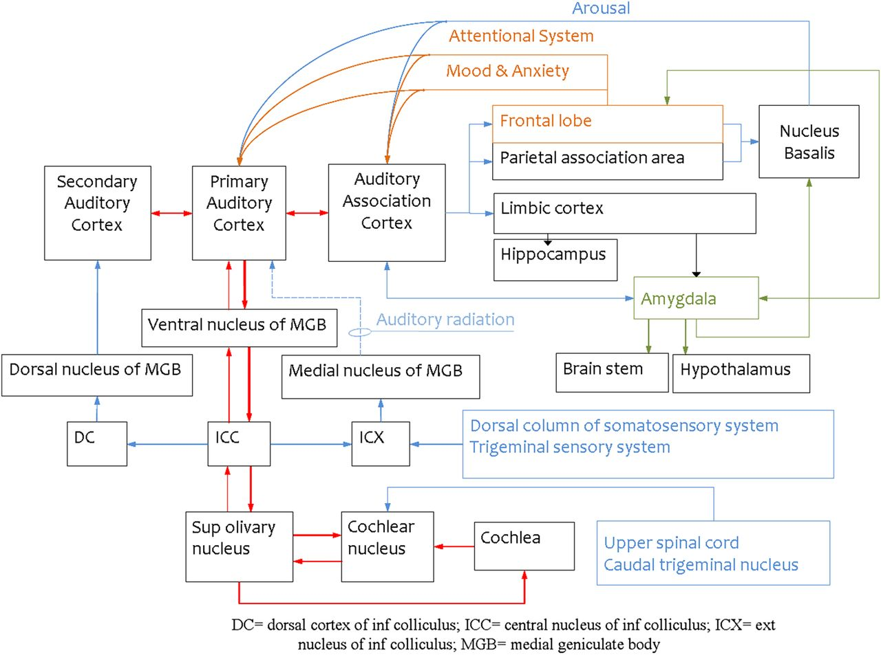 The neuropsychiatry of tinnitus: a circuit-based approach to
