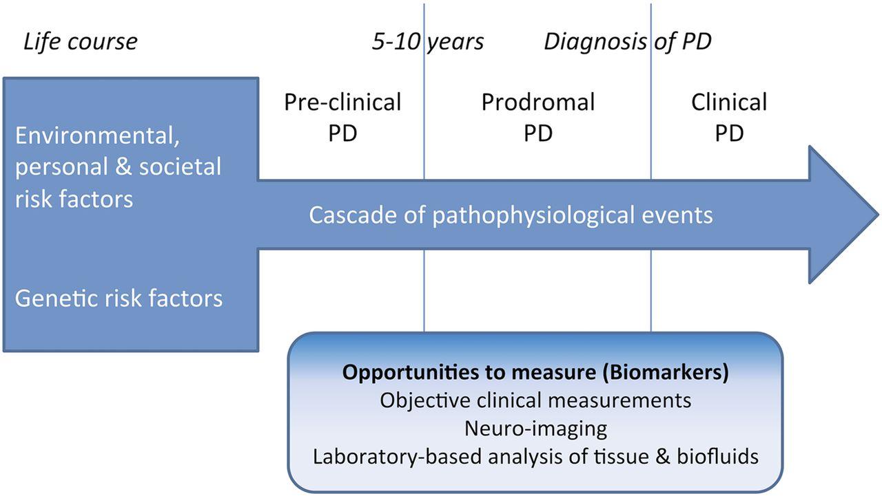 Parkinsons Disease Progression >> The Prediagnostic Phase Of Parkinson S Disease Journal Of