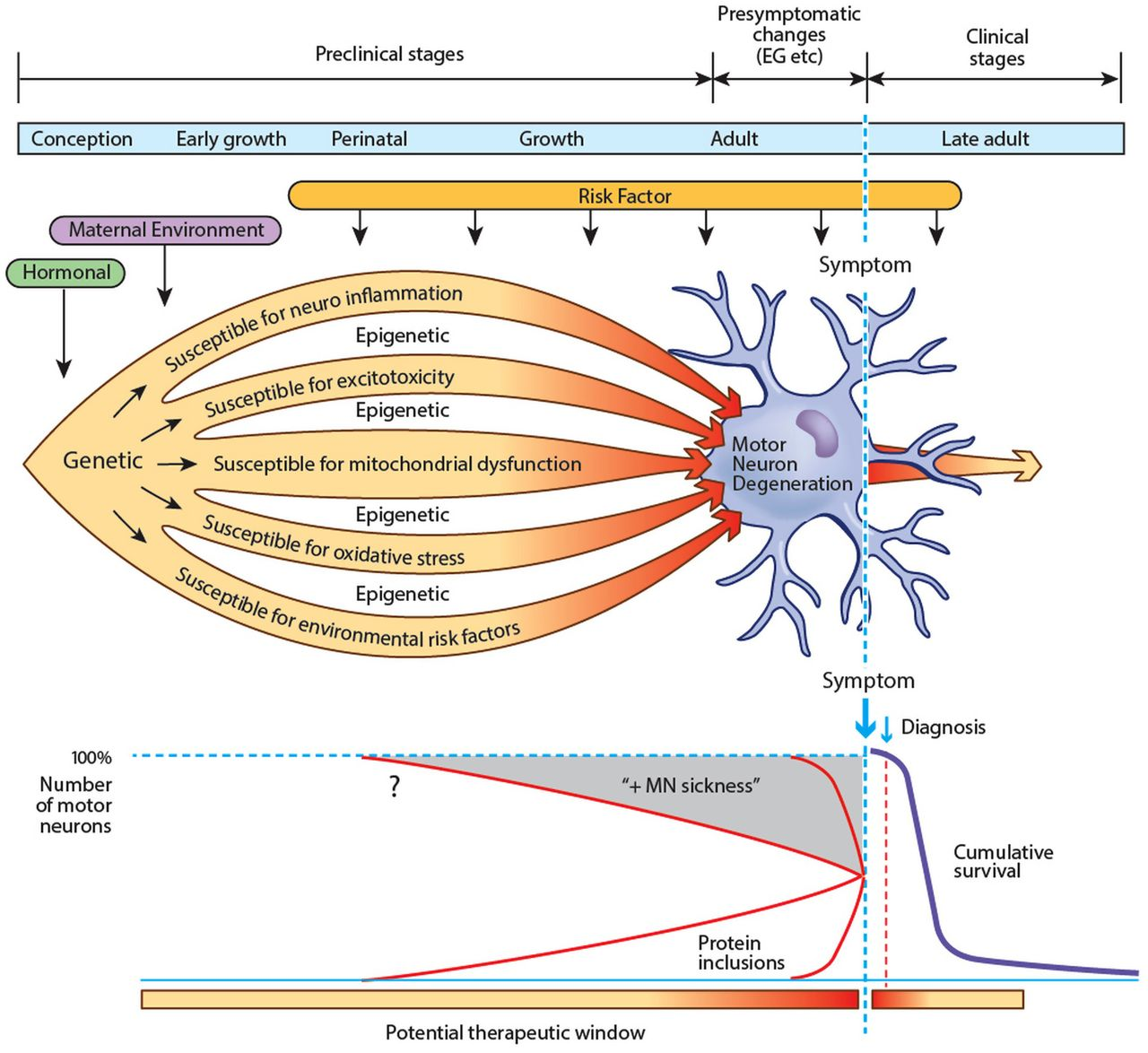 Amyotrophic lateral sclerosis a long preclinical period for Motor neuron disease symptoms early