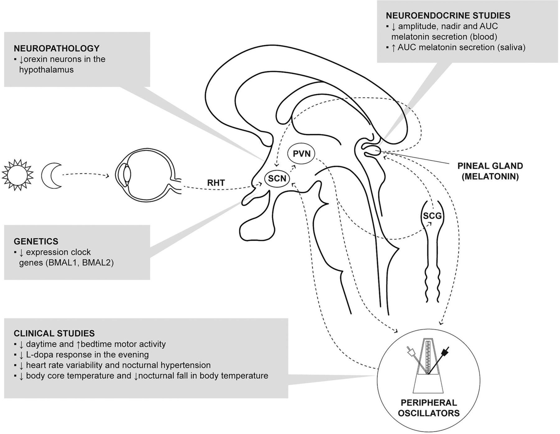 Neuroendocrine Abnormalities In Parkinsons Disease Journal Of Figure 2 10d Basic Armstrong Oscillator Circuit Download