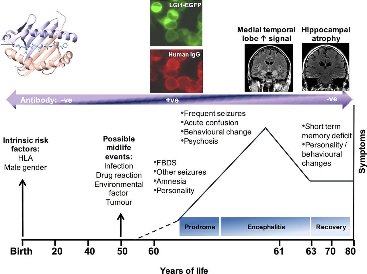 Lgi1  Caspr2 And Related Antibodies  A Molecular Evolution
